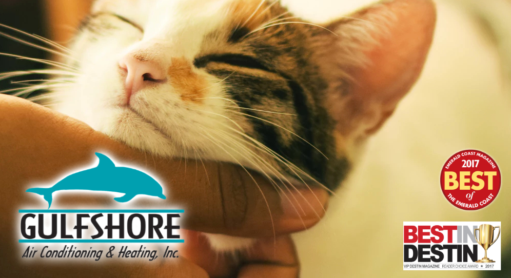 air quality for pet owners gulfshore air