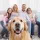 Top 6 Tips on Air Purification for Pet Owners